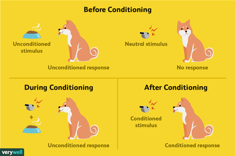 Pavlov Classical Conditioning
