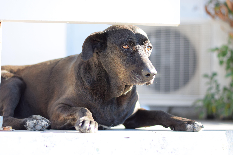 Camera shy stray dog