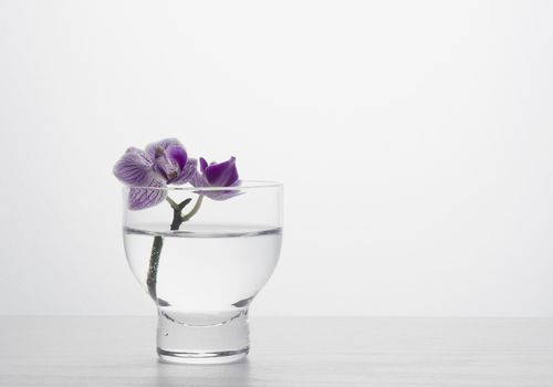 Single orchid in a vase
