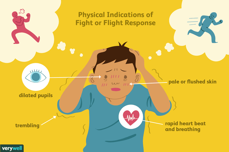 fight or flight response illustration