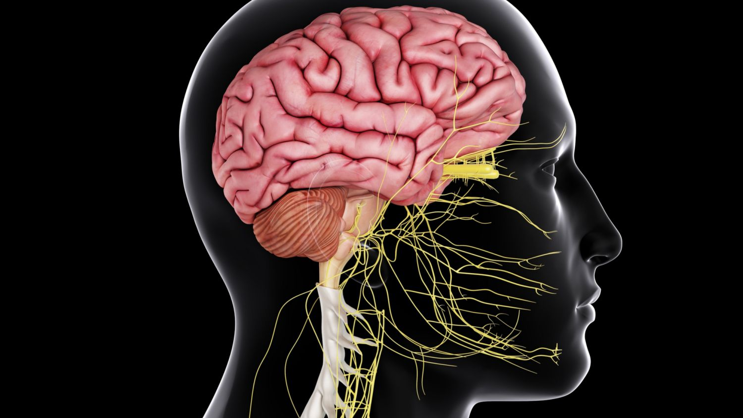 The Central Nervous System in Your Body