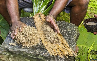 Local man shapes pounded kava root and rolls it into bamboo strips to make kava drink (also called sakau).