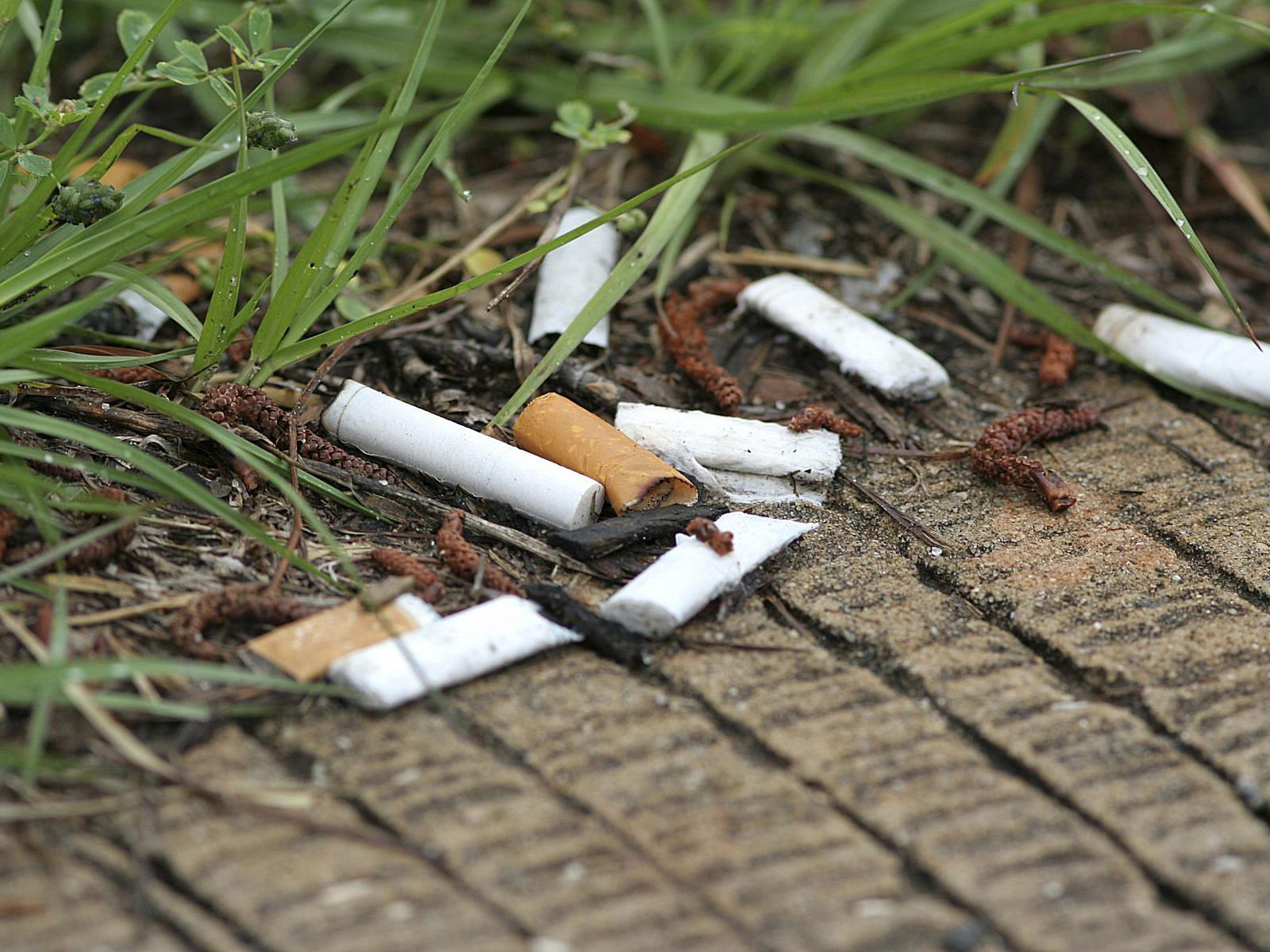 How Cigarette Butts Pollute the Environment
