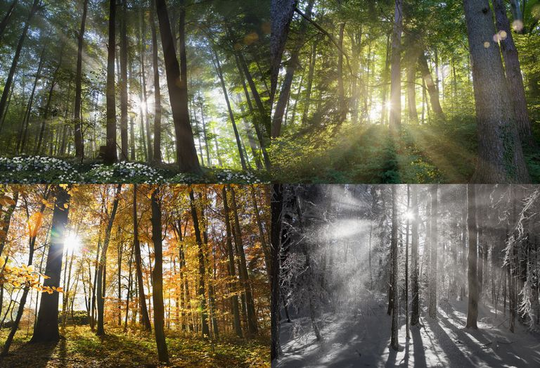 4 part photo showing forest scenes in each season