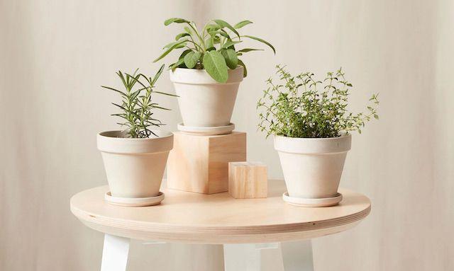 Bloomscape Indoor Plants