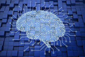 Brain with circuits