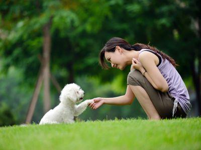 Woman Training Dog Shaking Hand and Communication- XXXXXLarge