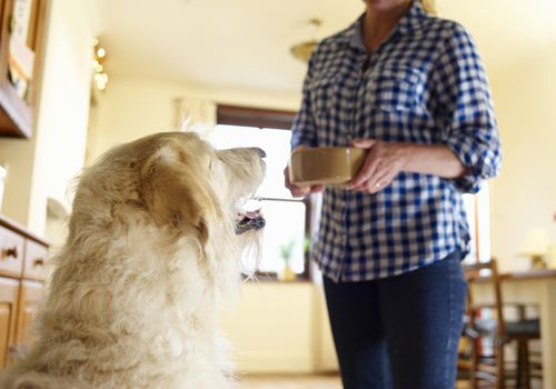 Dog waiting to be fed by woman with a bowl in her hands