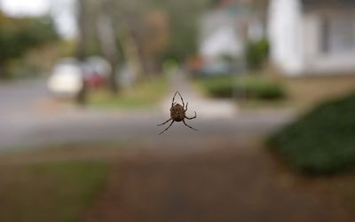 Close up of a spider outdoors.