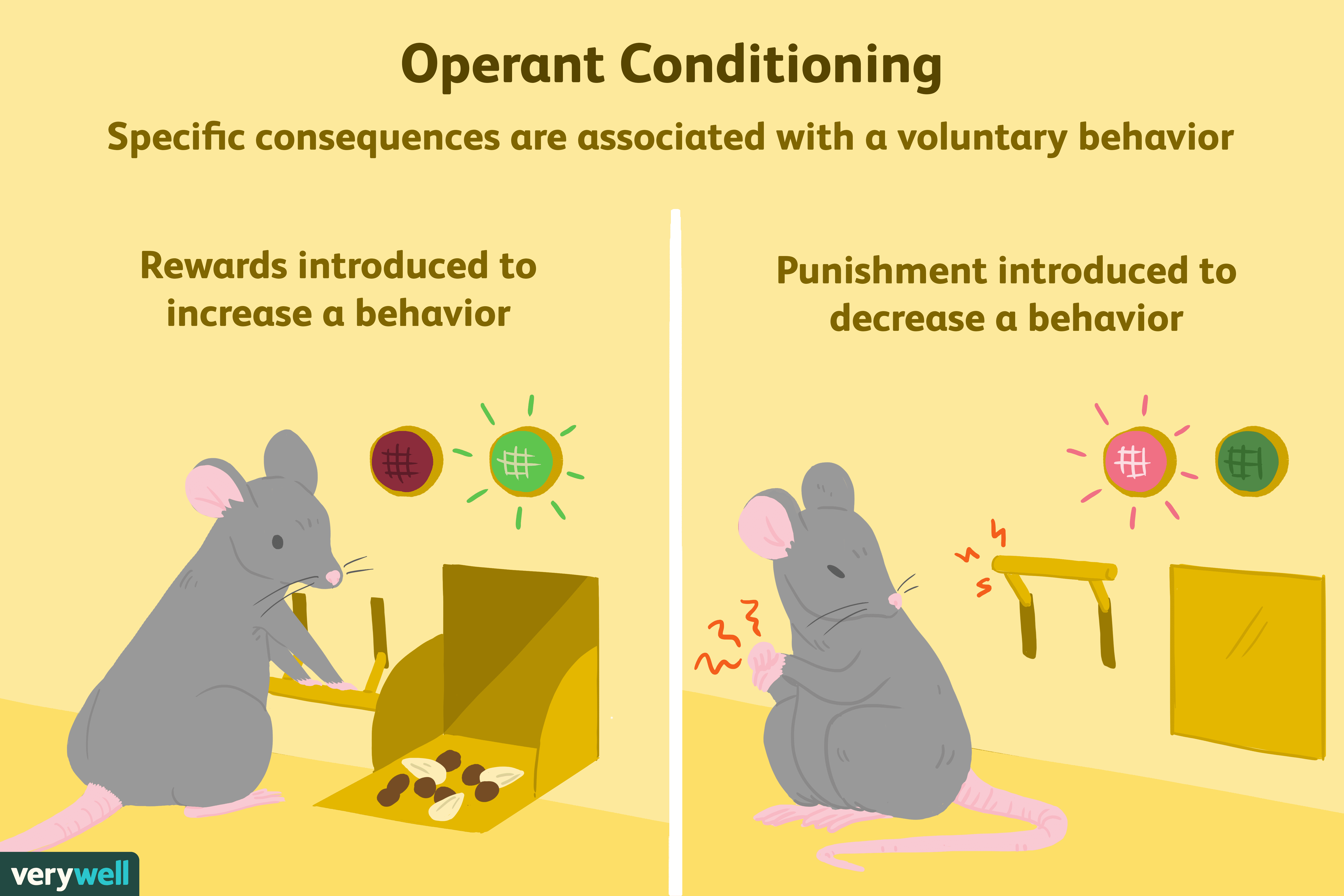 What Is Operant Conditioning and How Does It Work?
