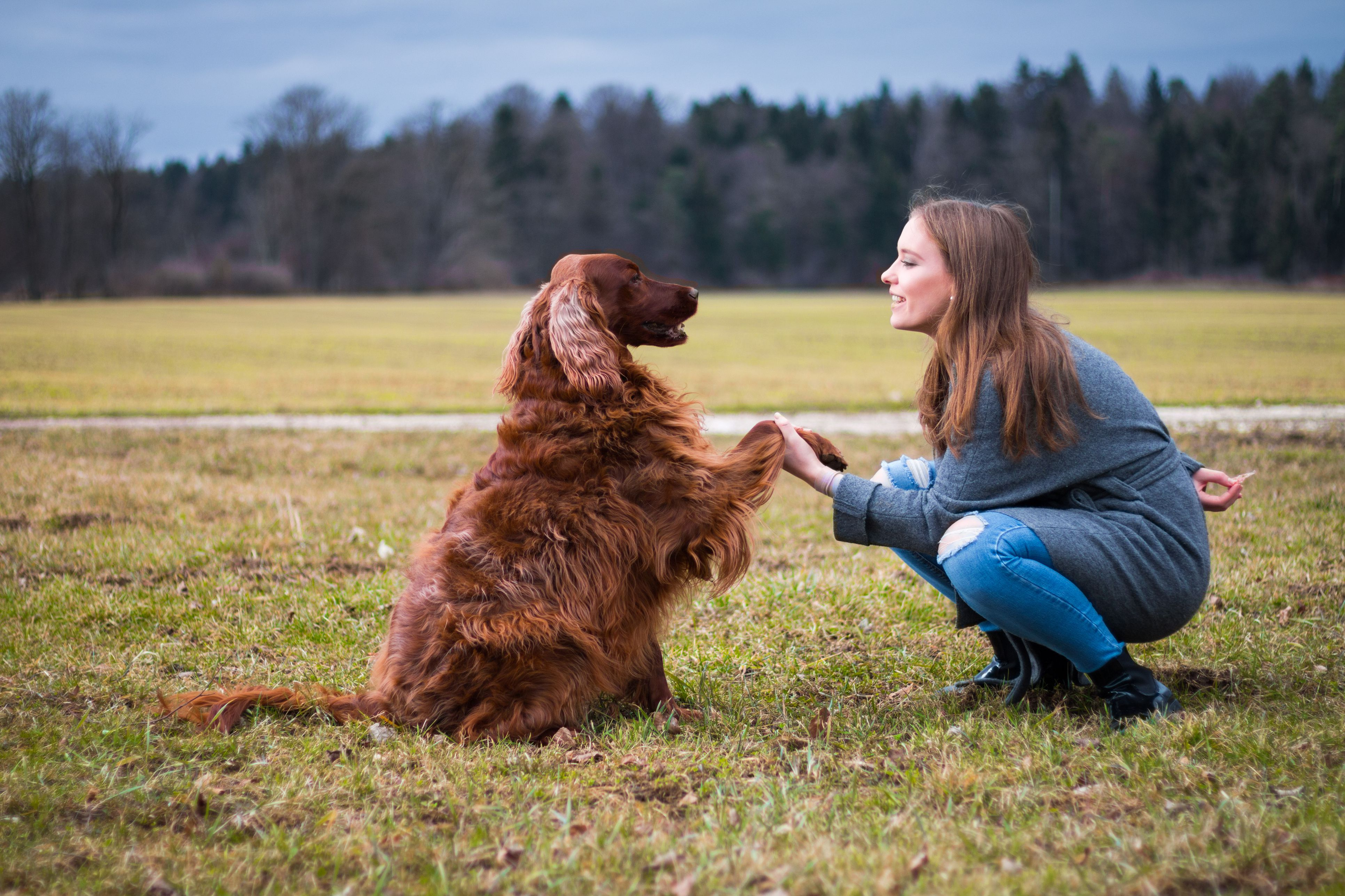 Acquisition In Classical Conditioning