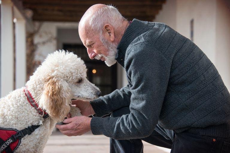 Senior man holding his standard poodle service dog's paw