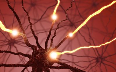 Peripheral nerves of the peripheral nervous system