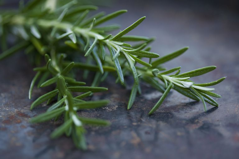 Rosemary for Your Memory?