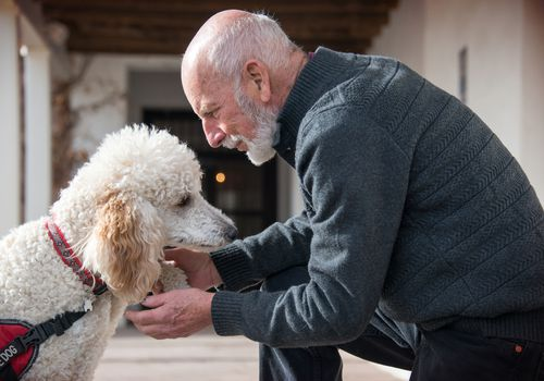 Senior man holding his standard poodle service dog's paw