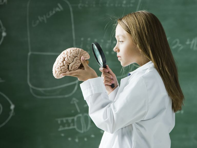 Girl looking at a brain with a magnifying glass
