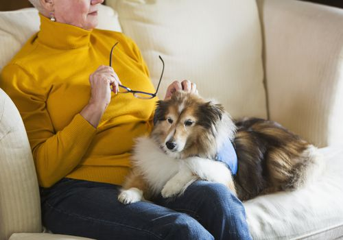 Senior woman on couch looking out window, with dog