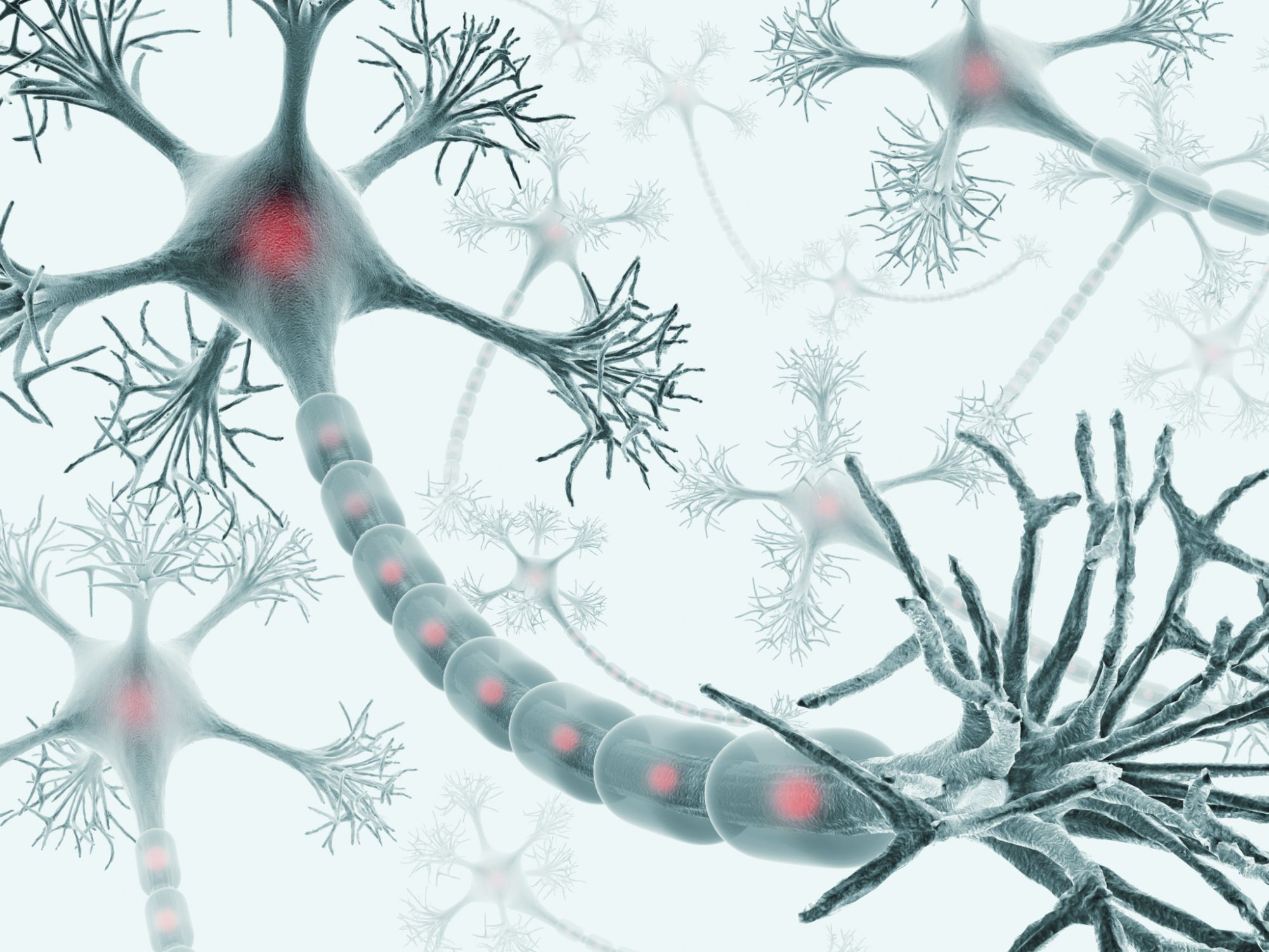 Understanding Neurons' Role in the Nervous System