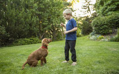 boy training dog in grass