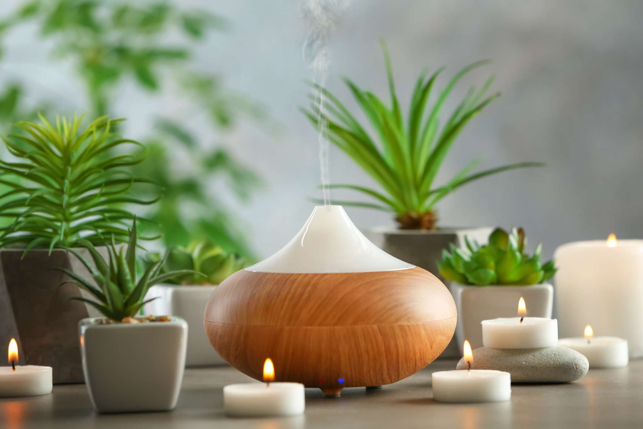 Oil diffuser on table with various succulents
