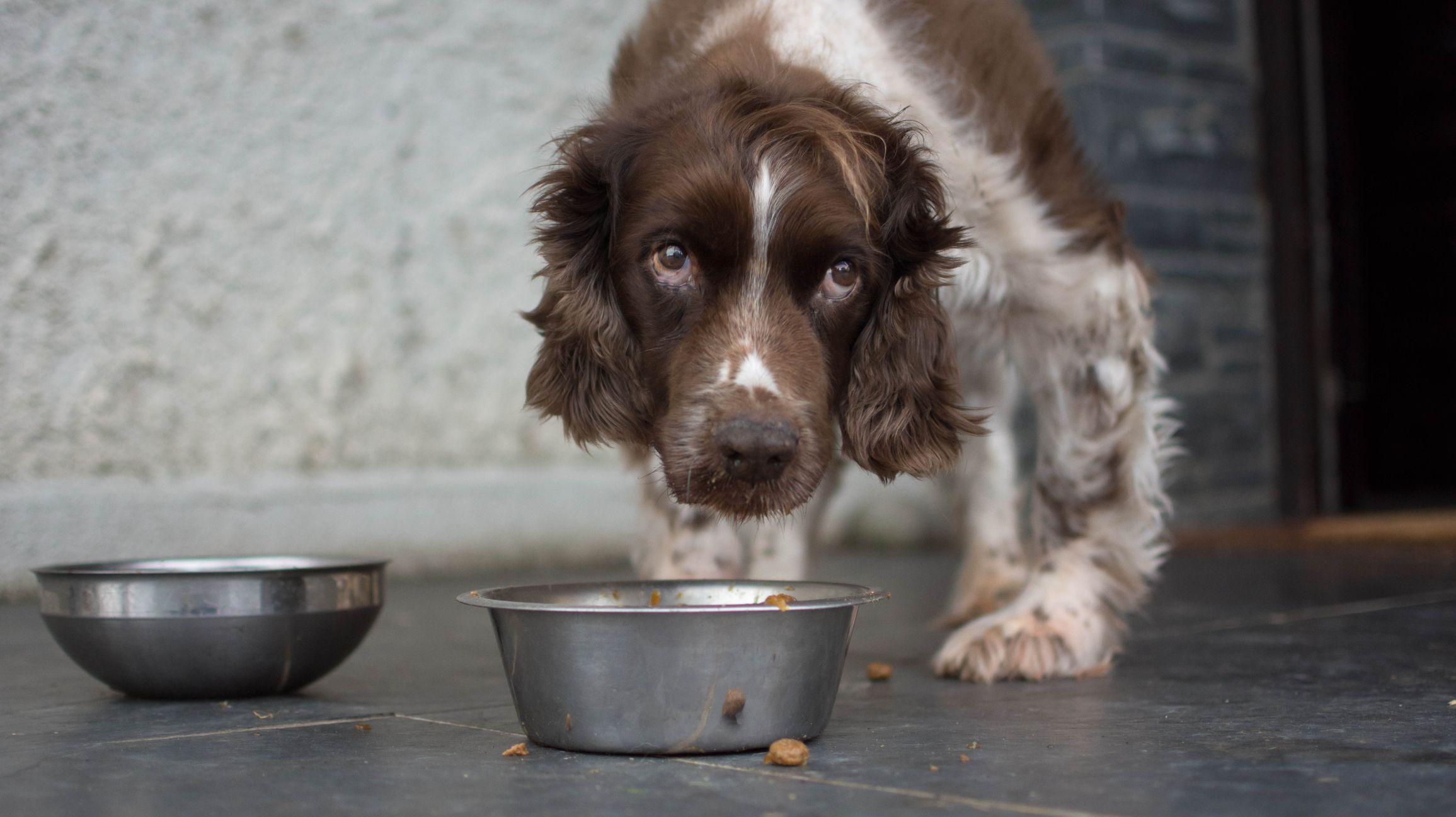what happens if a dog eats ativan