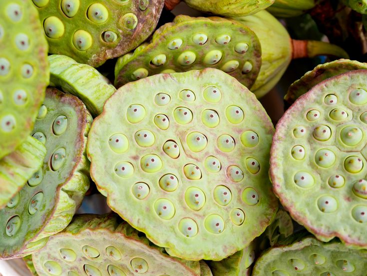 Trypophobia Symptoms Causes And Treatments
