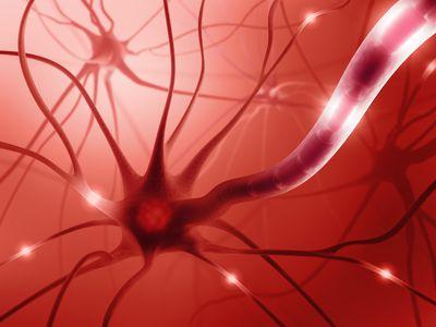 neuron network graphic