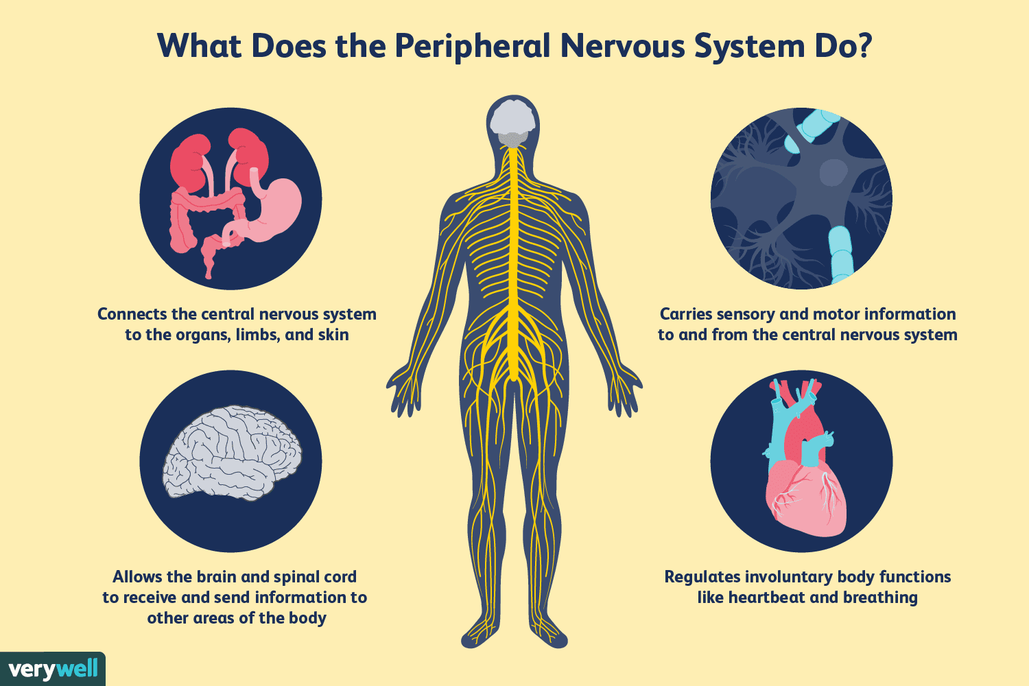 what is nervous system disorder