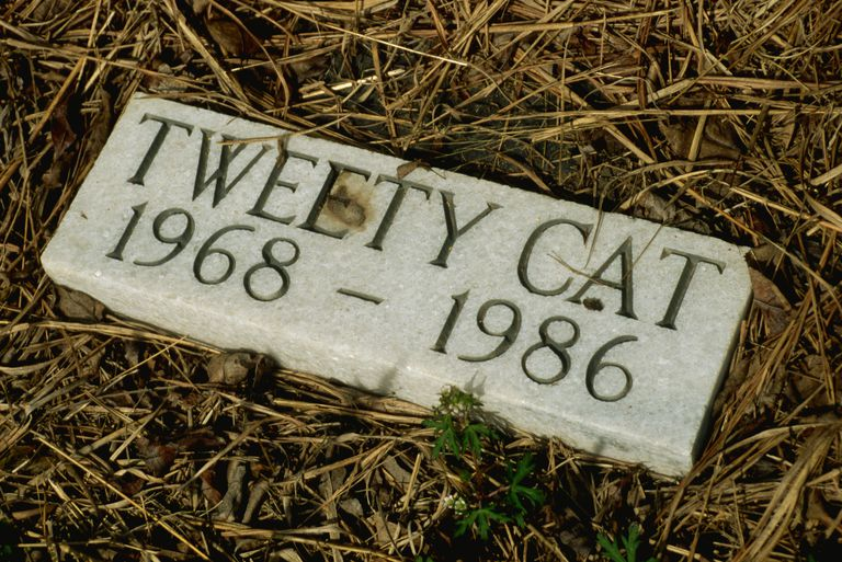 Gravestone for a cat.