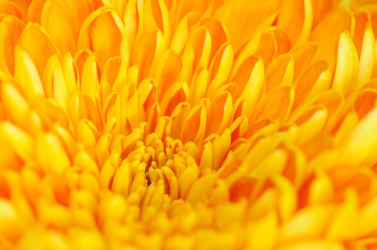 Color Psychology Of Yellow And Its Impact On Mood