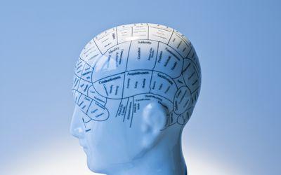Phrenology head.