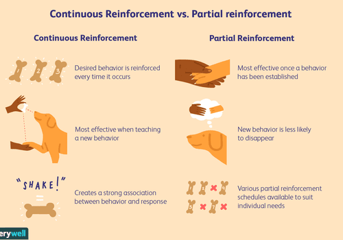 What is a schedule of reinforcement?