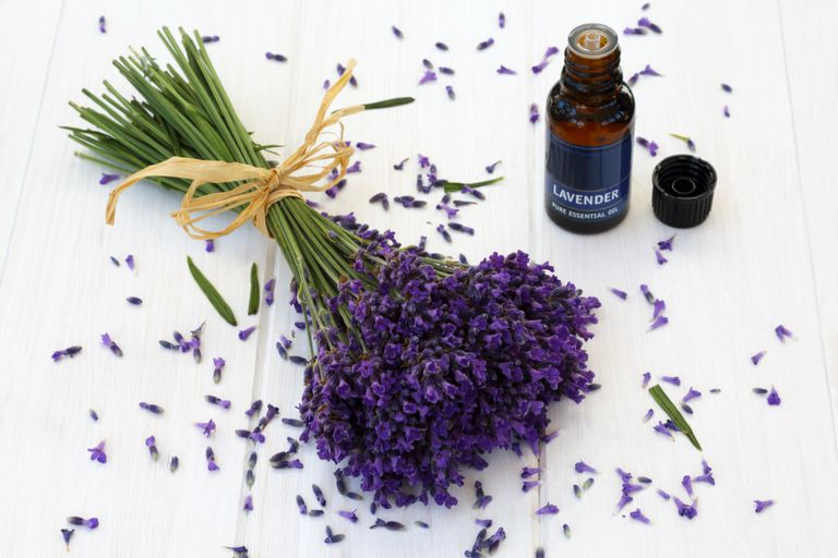 Using Lavender Essential Oil For Anxiety