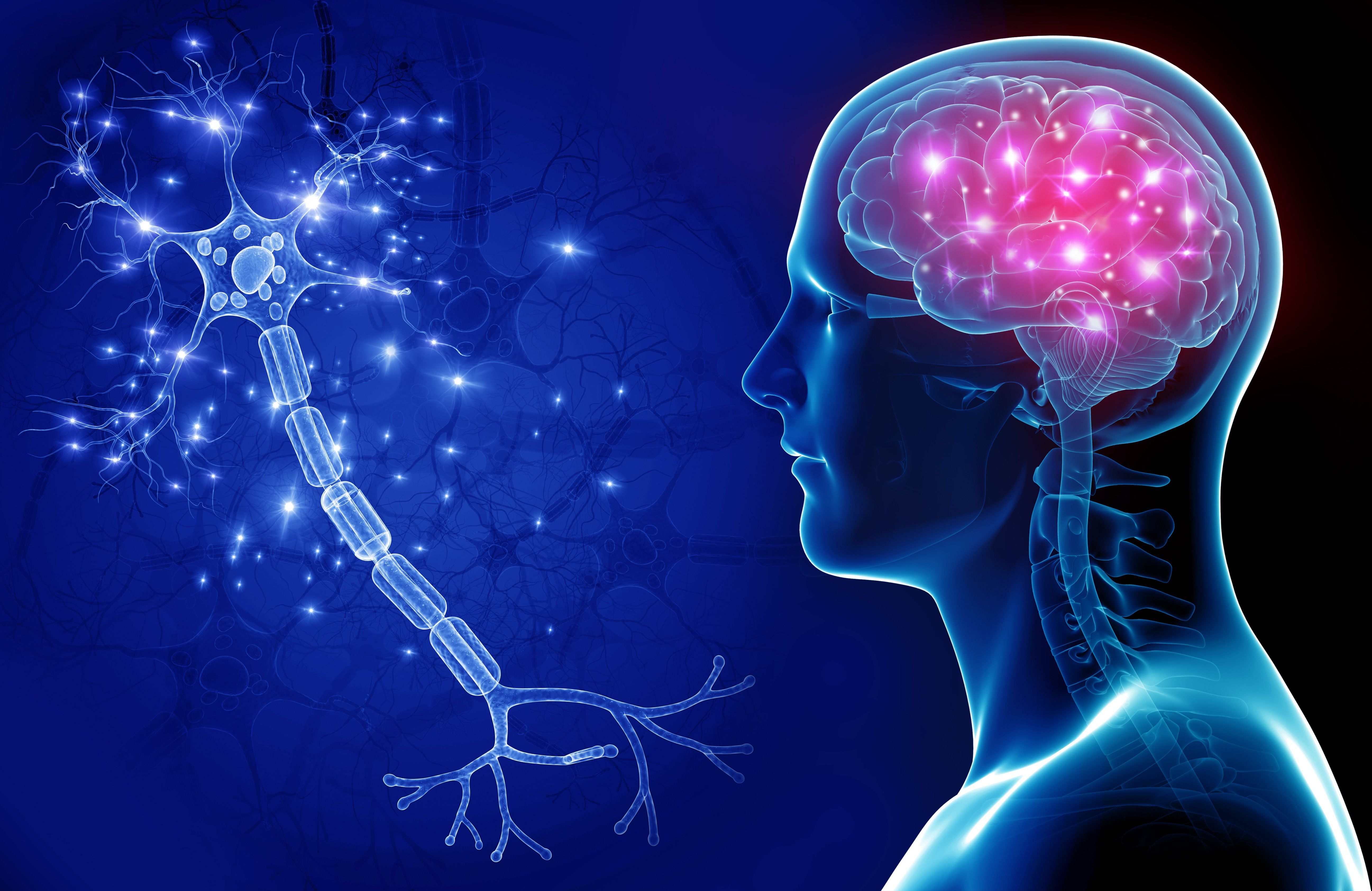 Brain Recovery After Being Alcohol-Free