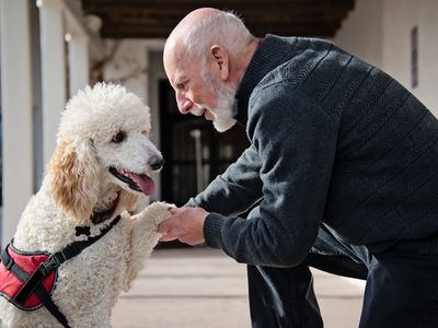 Senior Men with His Service Dog and a Best Friend