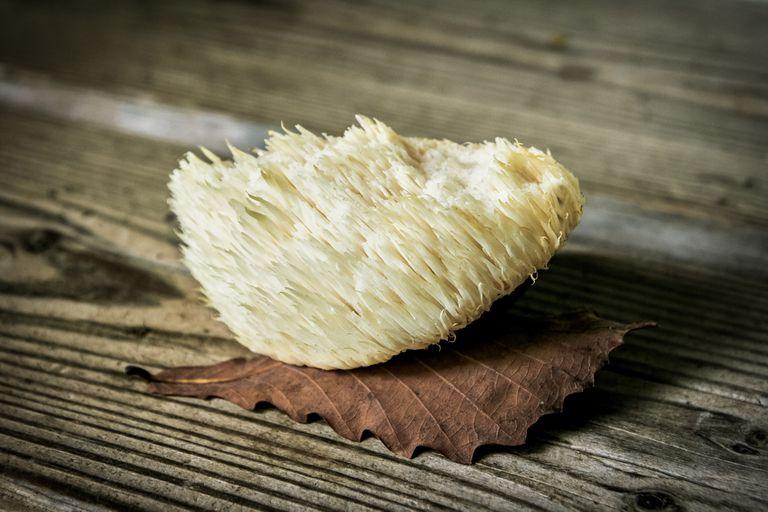 Lion's mane mushroom