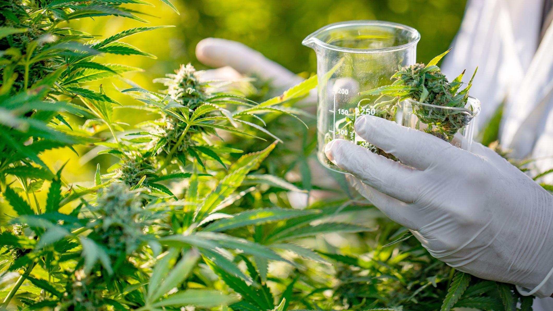 marijuana for depression