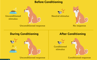 pavlov classical conditioning theory of learning ppt