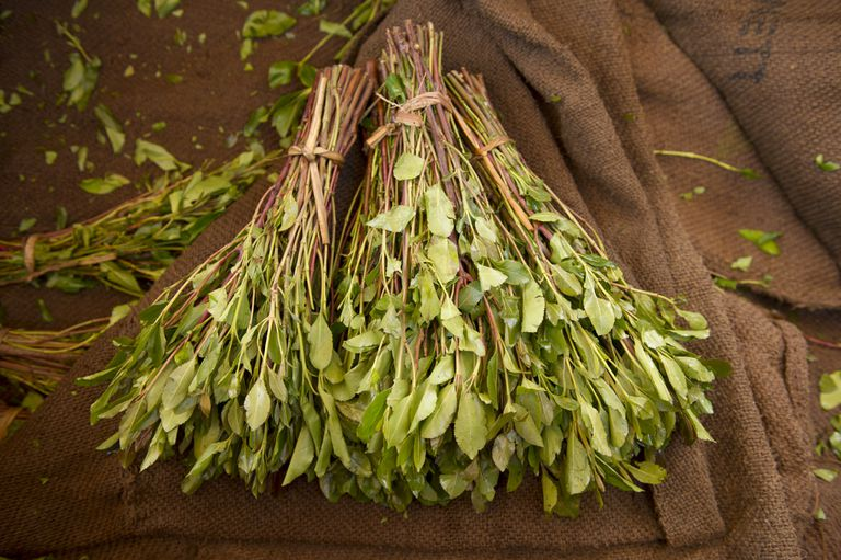 Khat: Myths, Effects, Risks, and How to Get Help