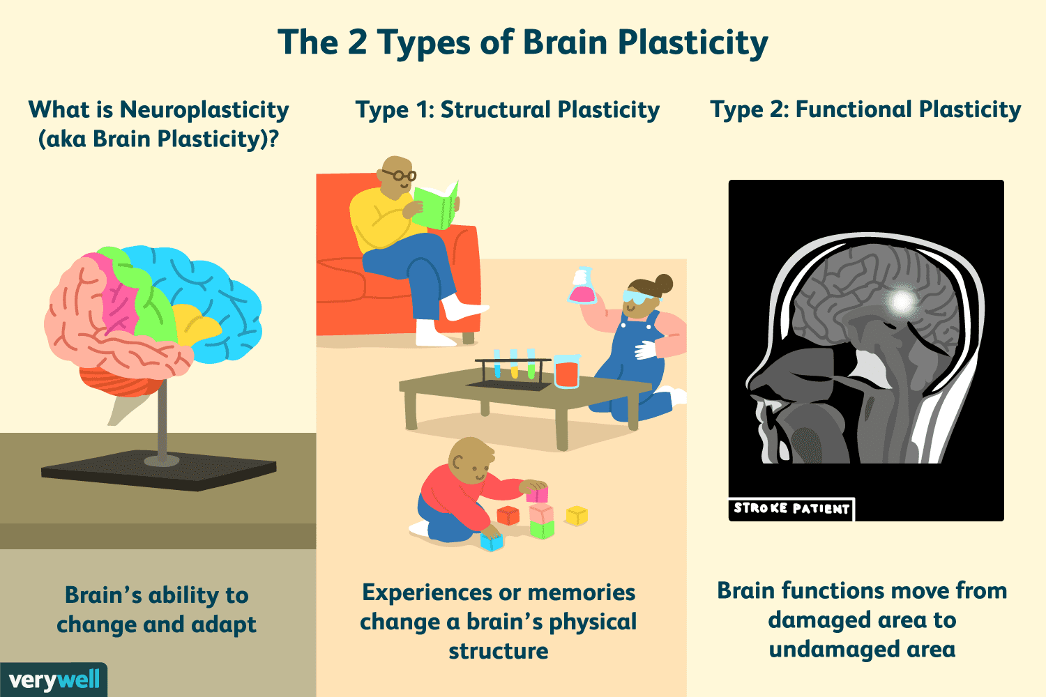 Early Stress Might Make Brains Grow Up >> Brain Plasticity How Experience Changes The Brain