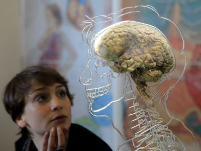 woman looking at statue with brain