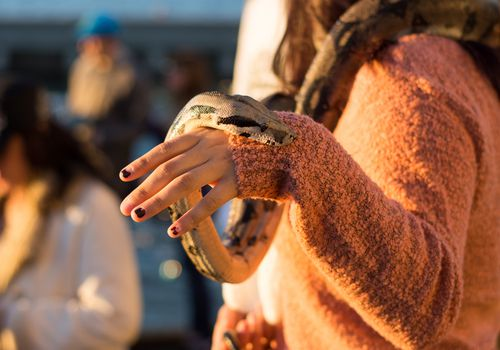 Close-Up Mid Section Of Woman Holding Python