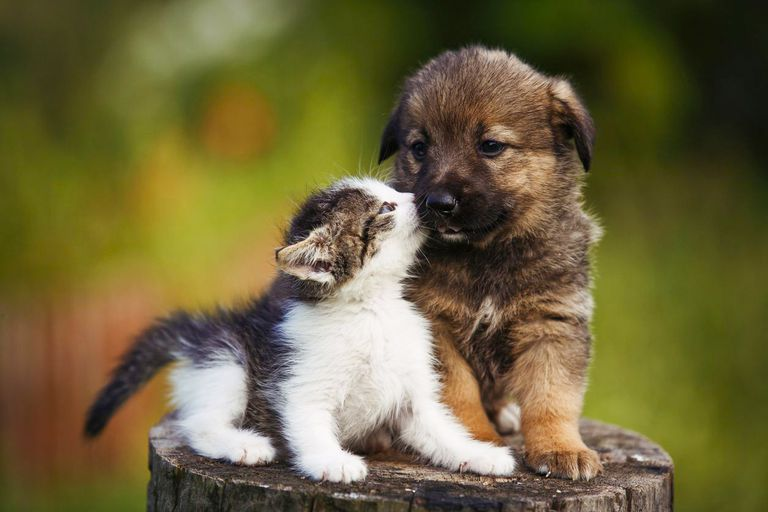 Stress Relieving Benefits Of Watching Cute Animal Videos