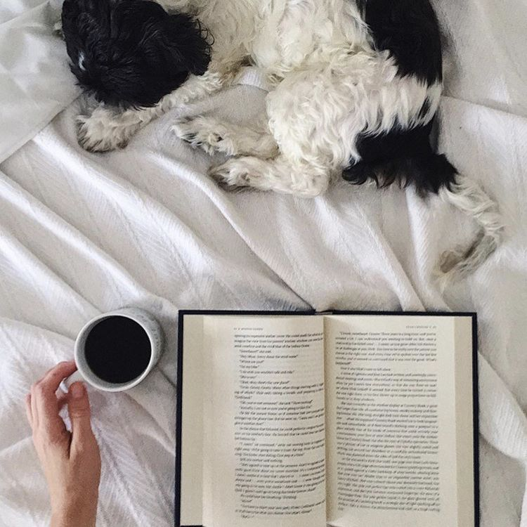 Dog and book