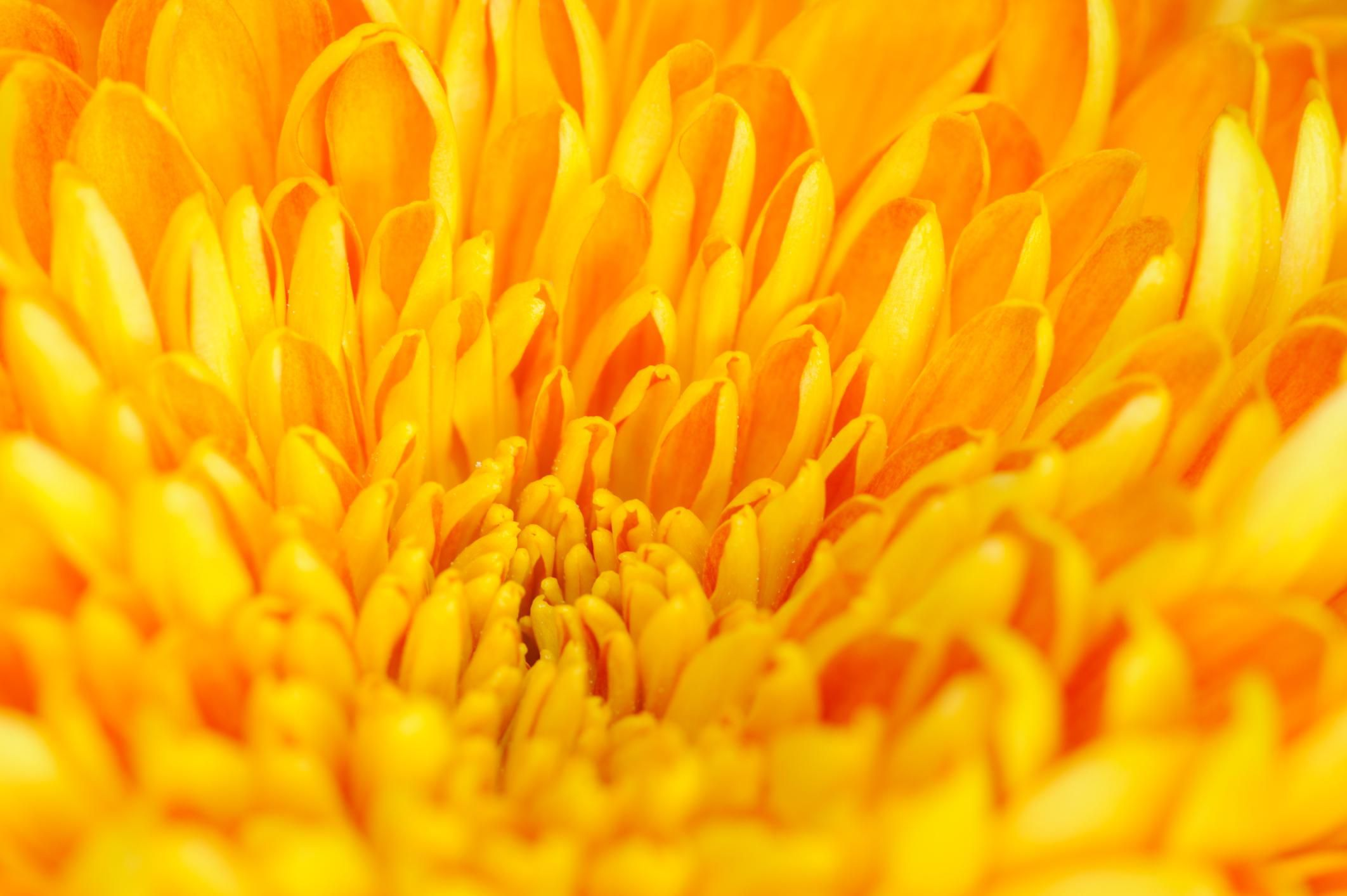 Color Psychology Of Yellow Its Impact On Mood