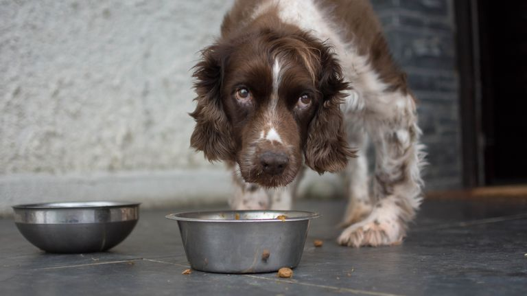 Symptoms to Watch for When a Dog Eats an Antidepressant