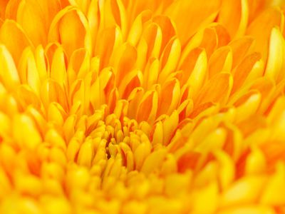 Close up of yellow flower petals