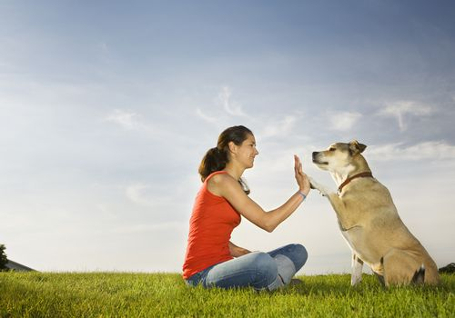 woman giving a high five to a dog