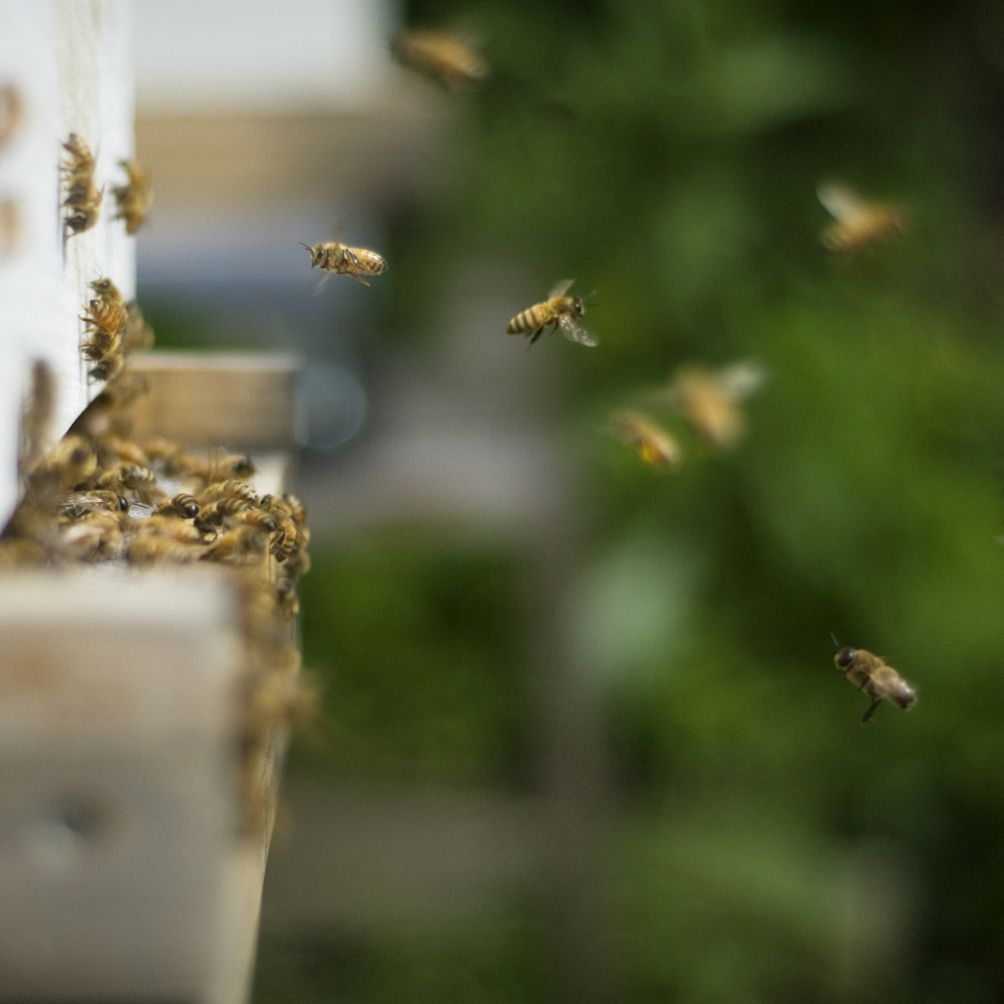 Understanding the Fear of Insects or Entomophobia