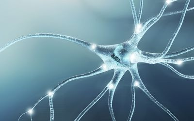 neuron lighting up